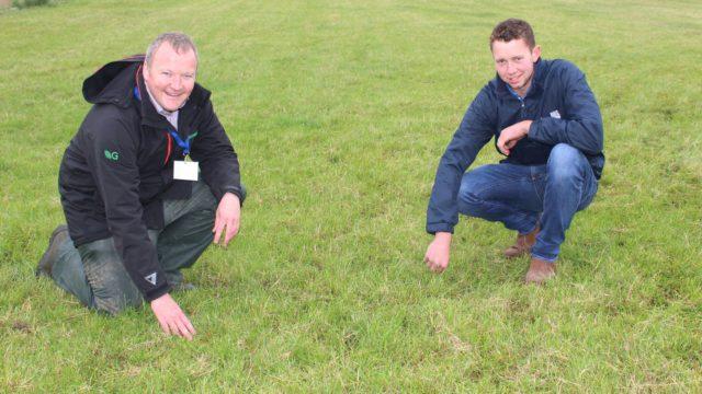 Sales of clover seed rocket as farmers aim to reduce fertiliser bills