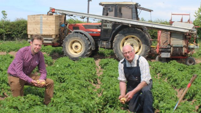 Irrigation now in use to maintain potato yields
