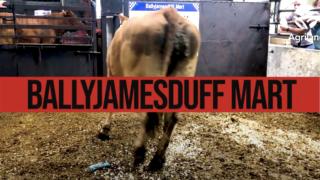 Cull Cows at Ballyjamesduff Mart