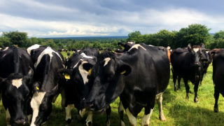 Using dung beetles to manage parasites in Co. Laois