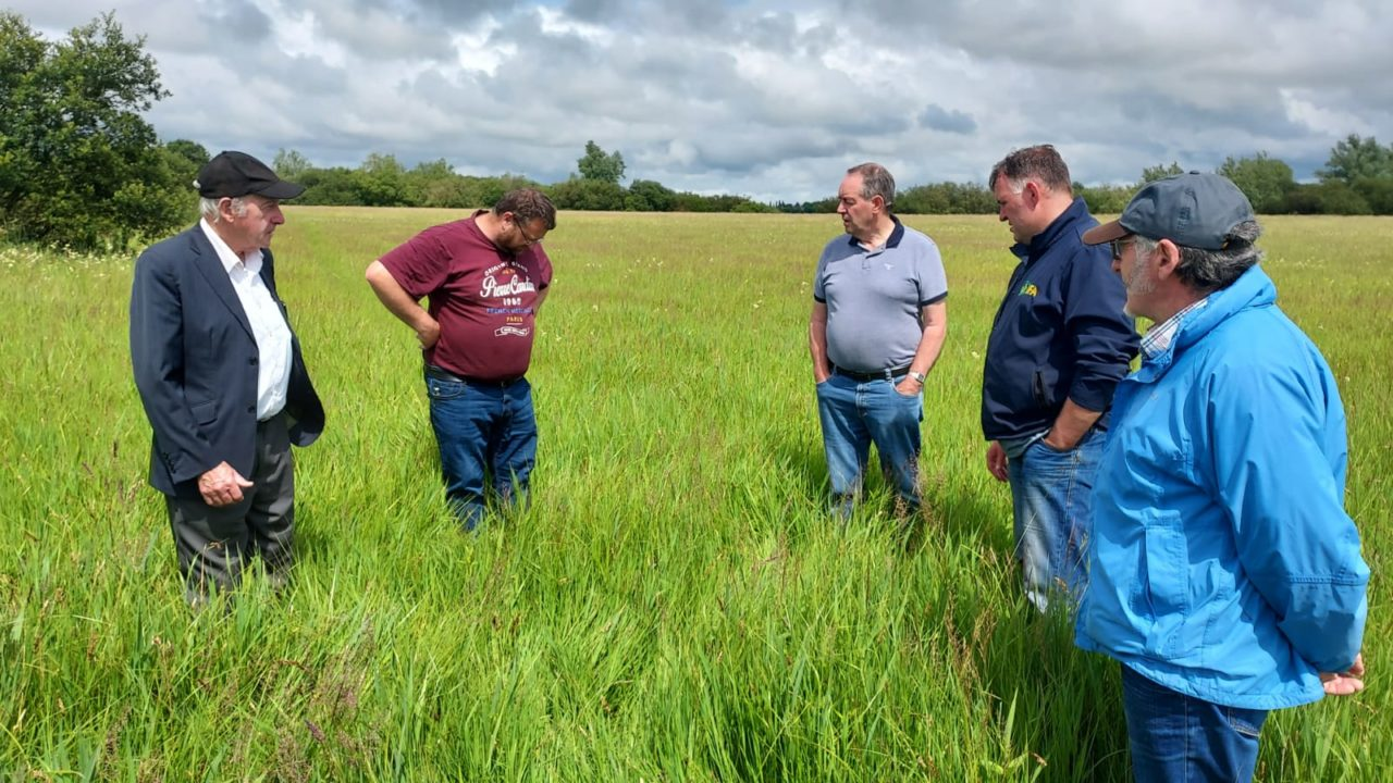 IFA urges OPW to manage Shannon water levels to save crops