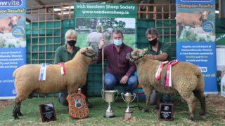 Offaly farmer's ram tops the Vendéen premier sale at €1,600