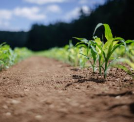 Copa-Cogeca: Producing food 'while respecting planetary boundaries' must be rewarded