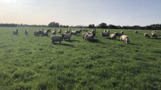 Average income on sheep farms increases by 24% in 2020 – National Farm Survey