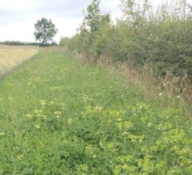 Laois farmer gets enthusiastic response to biodiversity project