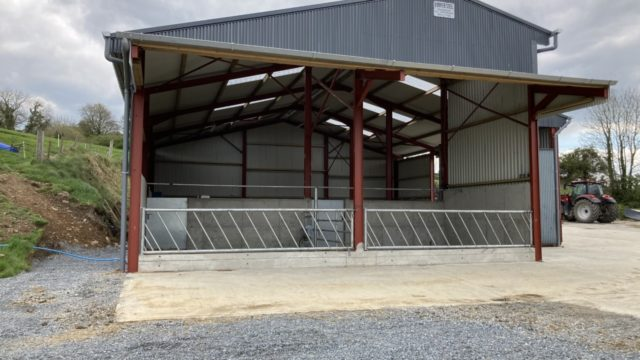 Advice not to house cattle this week amid mild temperatures