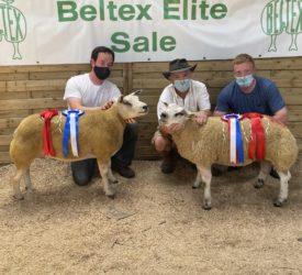 Belgian Beltex Elite Sale sees a shearling ewe top it at €1,740
