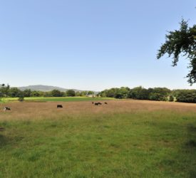 49ac residential farm at Kildorrery, Co. Cork for sale