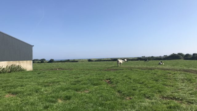 Dairy Focus: 40 years of breeding at Tubbertoby Holstein