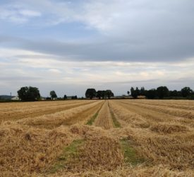16ac of 'top class lands' for sale in Cashel, Co. Tipperary