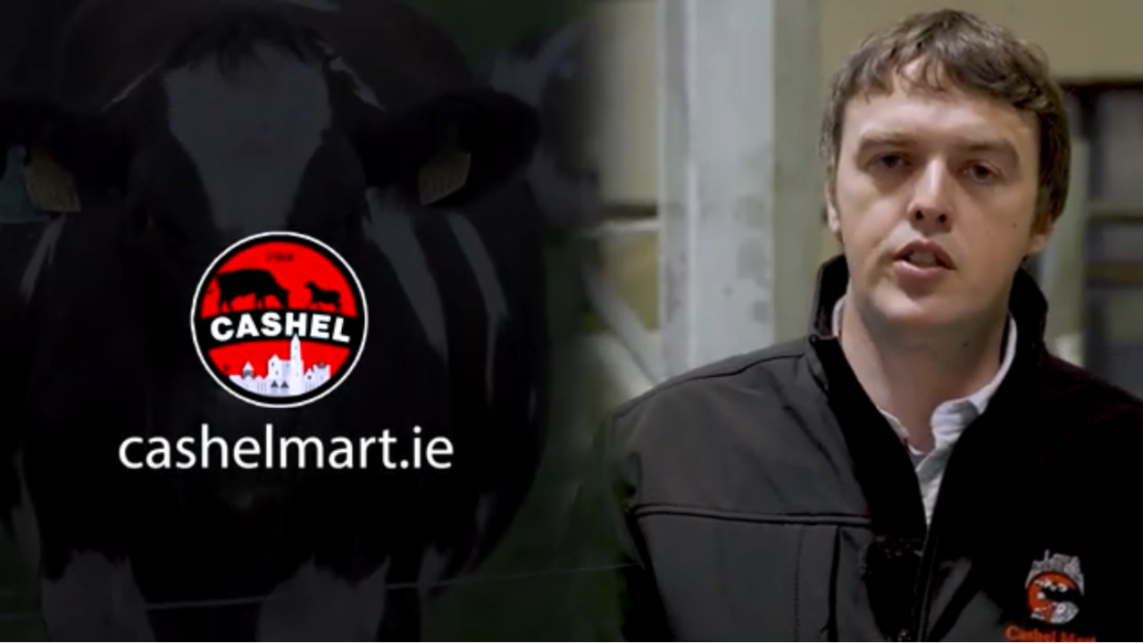 Video: Cashel Mart unveils new dairy-cow sale method