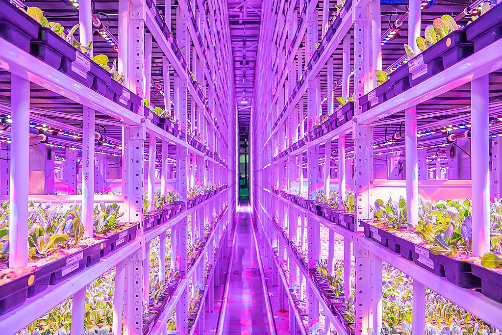 Vertical farming in Moscow
