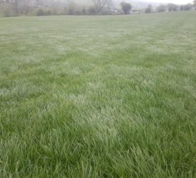 Grass growth rates holding strong