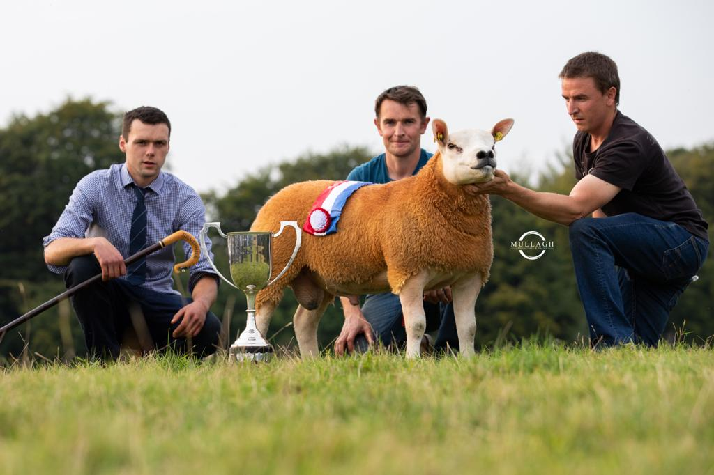 Irish Texel Society set for premier show and sale this Friday and Saturday