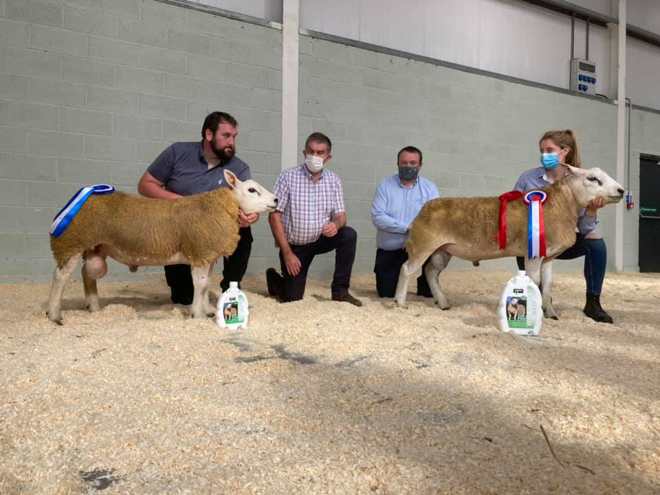 North East Texel Club Sale sees prices reach €1,020