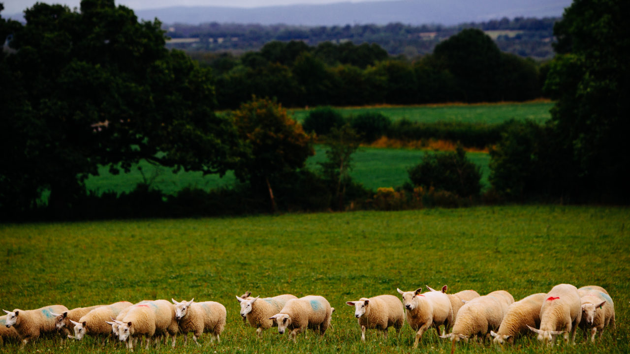 Market specifications that maximise returns from finishing lambs