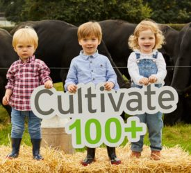 Cultivate finance lending platform sees beef farmers apply for most loans