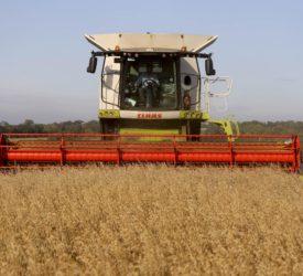 格兰比亚宣布2021年收获季谷物价格