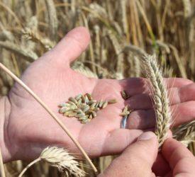 """黑麦有可能将""""全盘收购""""从等式中剔除"""