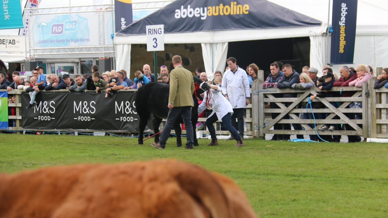 Balmoral Show: Several cattle leave show early after spate of respiratory infections