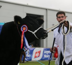 Angus cow-calf duo clinches Balmoral interbreed in 'maternal masterclass'