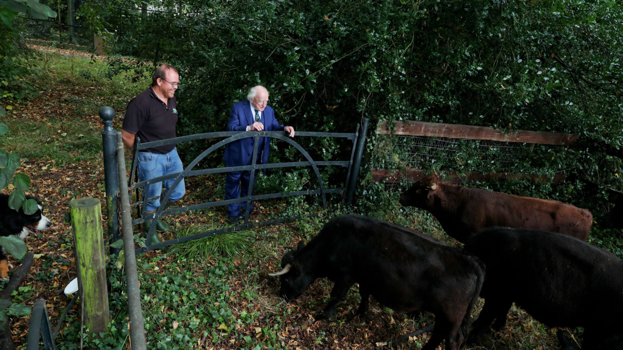 Dexter cattle to graze Áras grounds as part of biodiversity programme
