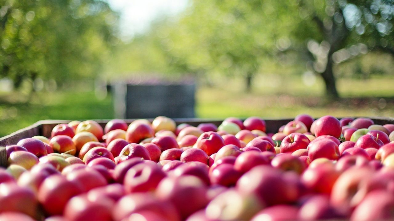 EU pledges €140m to support research in sustainable food systems