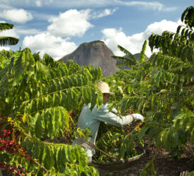 Nestle unveils plans to reduce emissions and support farmer education