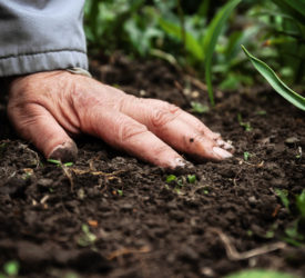 The release of nutrient reserves in soil – a PDA perspective