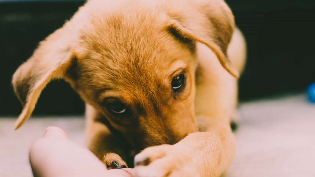 Minister must 'close puppy smuggling loophole' – Boylan