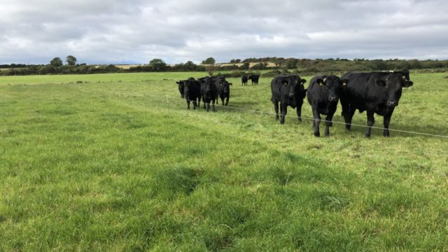 Beef kill: Throughput for last week just shy of 36,000 head once again