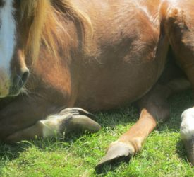 Cork man banned from keeping equines for 5 years