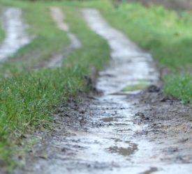 天气:不稳定,不时有大雨,周中转为温和