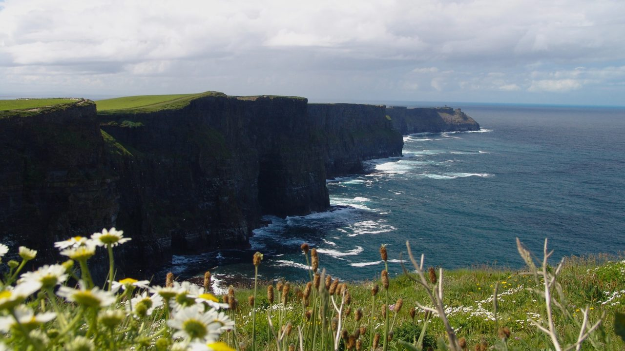 'Centralised dashboard' for Irish nature-related data recommended