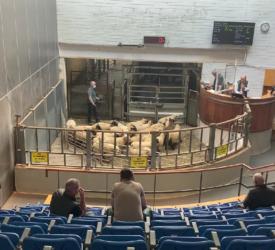 'Phenomenal trade' seen at Kilkenny Mart's sheep sale on Monday