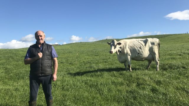 Dairy Focus: Mohoncross Holstein starting with 9 calves