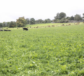 Biomethane could reduce beef farm emissions by 25%