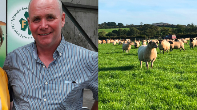 'Planned Sheep Improvement Scheme will only deliver a payment of €7.70/ewe'