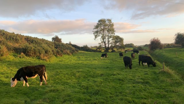 Beef price: 'Stand on' is the line from factories this week