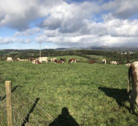 Dairy Focus: Stepping back without a successor in Donegal