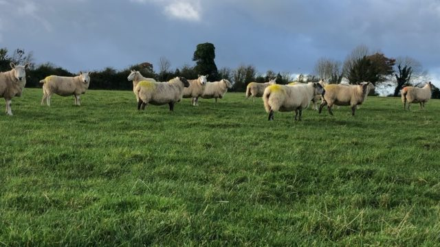 Closing up ground to ensure grass is available for next spring