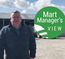 'Strong trade all round at Castlerea, with farmers looking to replenish numbers'